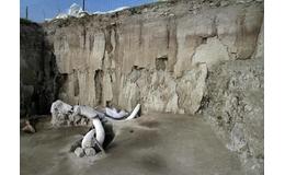 Hallazgo de 14 mamuts en Tultepec, Estado de México