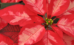 5 cosas que debes saber sobre la Nochebuena