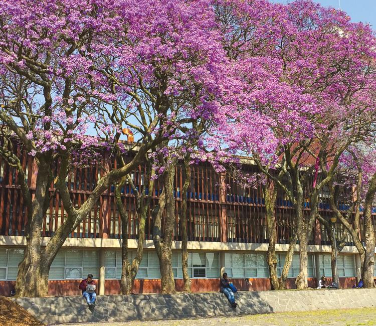 CDMX, la ciudad de las jacarandas